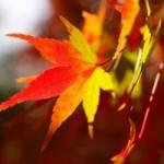 夏から秋へ。季節の変わり目で気をつけたいこと。